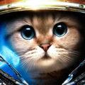 Кошка в скафандре